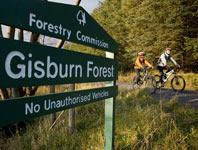 GisburnForestSign
